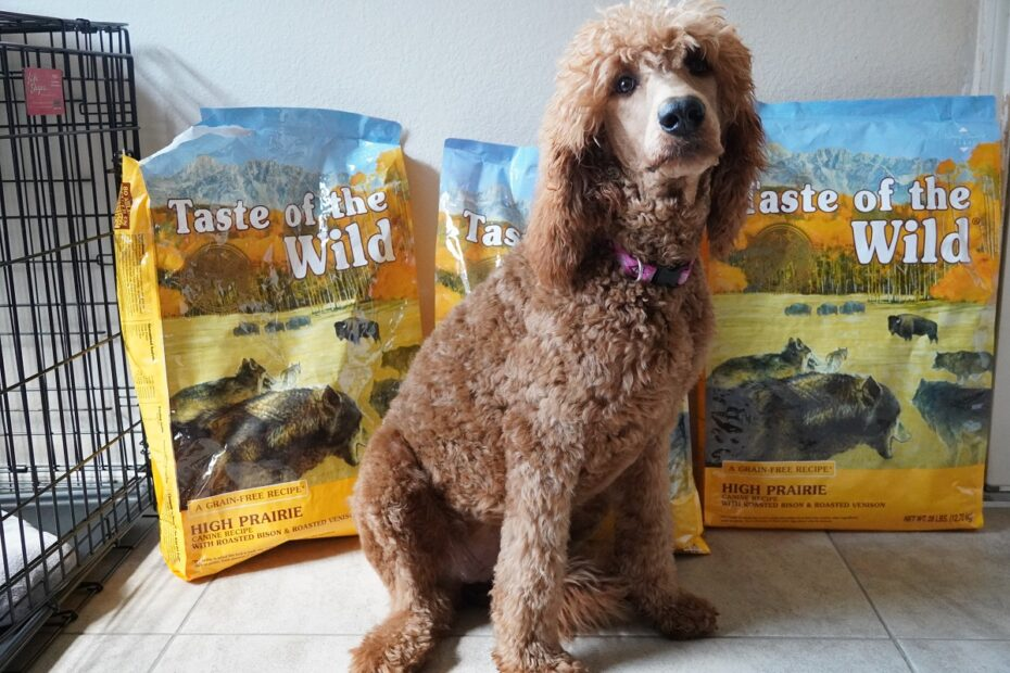 poodle with food bag