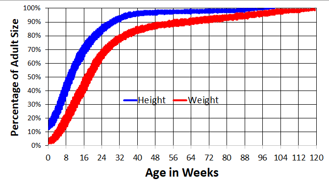 Typical Standard Poodle Growth Chart
