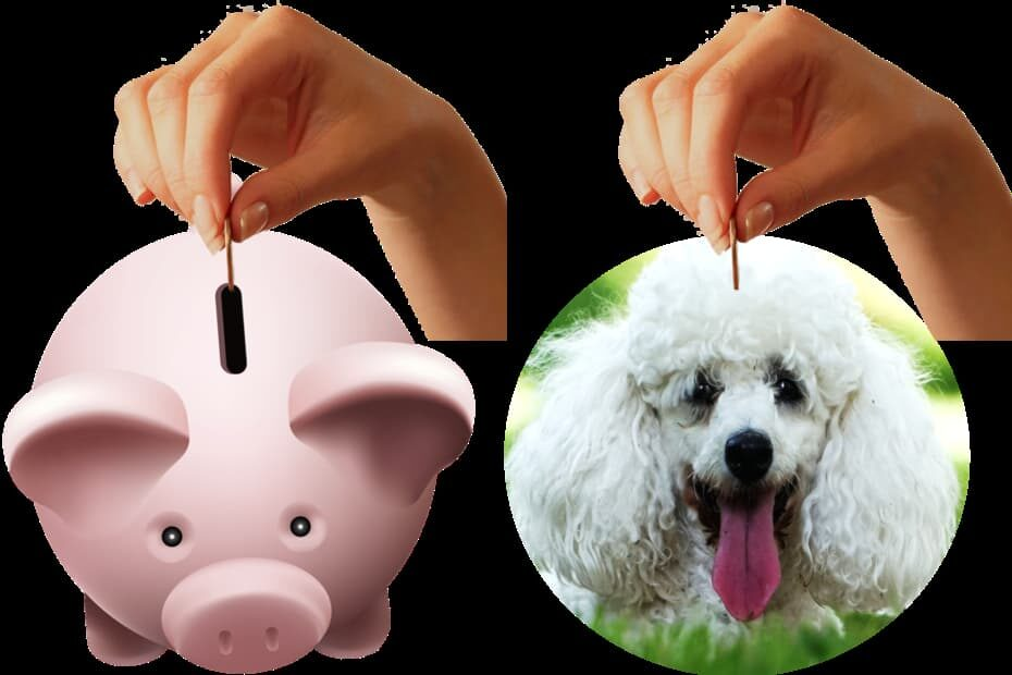 saving money for a toy poodle