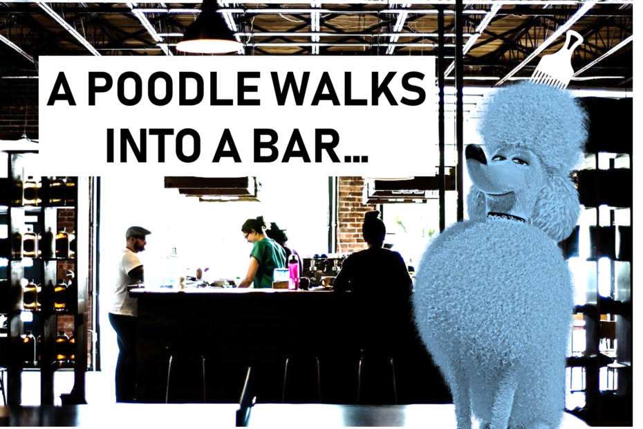 funny poodle picture