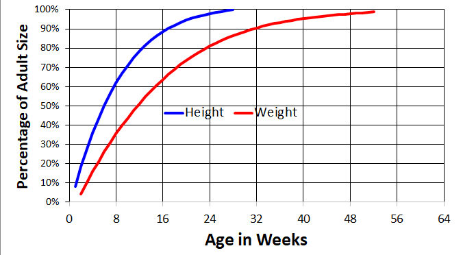 toy poodle growth chart