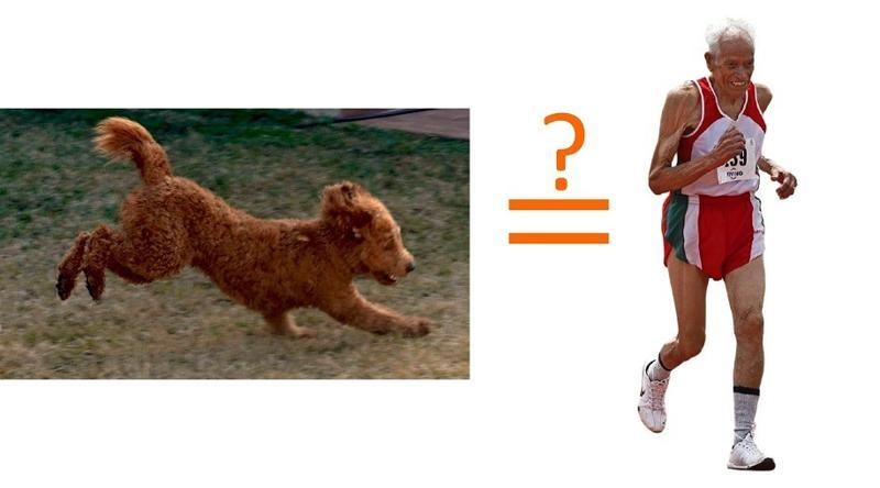 running poodle equals to running man?